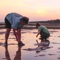 Exploring Nature: Evening at the Edge of the Sea with Dr. Heidi Geisz