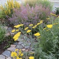 Glocester Heritage Society's Garden Tour