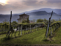 Dine with the Winemakers Series - Masi at Taverna Banfi