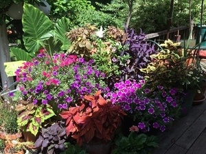 Plant Exchange in Thompson Park In Ithaca on Sept. 17