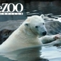 Volunteer at the Zoo with the Animal Welfare Committee
