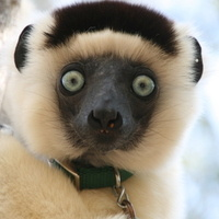 Friendship and Female Power in the Lemurs of Madagascar