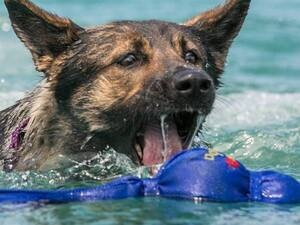 Bark in the Waterpark at Lanier Islands