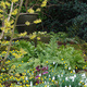 UD Botanic Gardens presents: Design Ideas and Plant Combinations for Winter Gardens