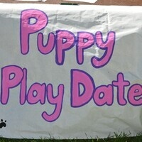 Puppy Play Date