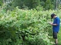 Impacts of Invasive Plants on People and Wildlife
