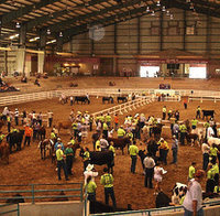 SC Junior Beef Round Up