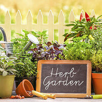 Herbs: Growing, Preserving and Cooking