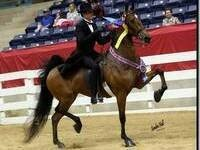 SC Tennessee Walking Horse Championship