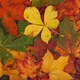 Tiny Tots and Family -Fall Walk and Leaf Crafts - Tuesday Afternoon