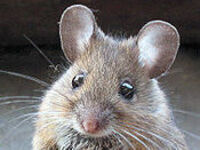 Rodent Control Virtual Conference