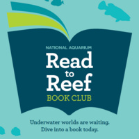 Read to Reef Shuttle Service