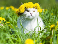 Using Herbs to Treat Chronic Illness,  from Cats to Cows