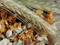 Culinary Connections - Grains
