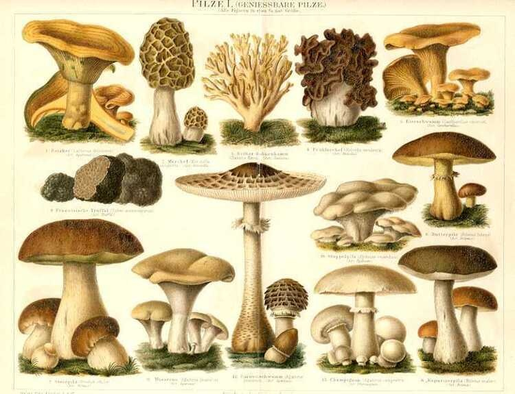 CULINARY ADVENTURES: A MELANGE OF MUSHROOMS