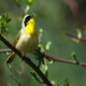 Birds and Blossoms: Guided Bird Walks at Cornell Plantations