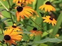 Carolina Yards Online Guide to Environmentally Friendly Gardening Online Course begins April 9th!