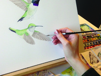 Drawing and Painting the Natural World: A CAU summer program led by Liz Fuller