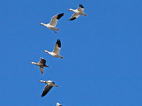 Highways in the Sky—Wind and Weather Patterns for Bird Migration