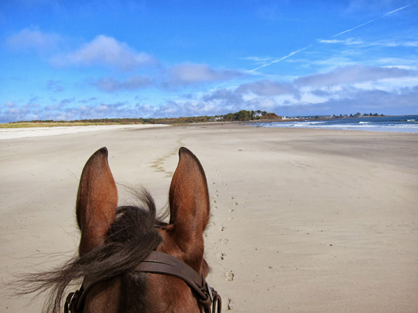 Beach Horse Back Riding and Camping