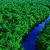 Can a New Industrial Revolution Save the Amazon Forest?