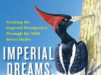 Imperial Dreams: In Search of the Long-Lost Imperial Woodpecker