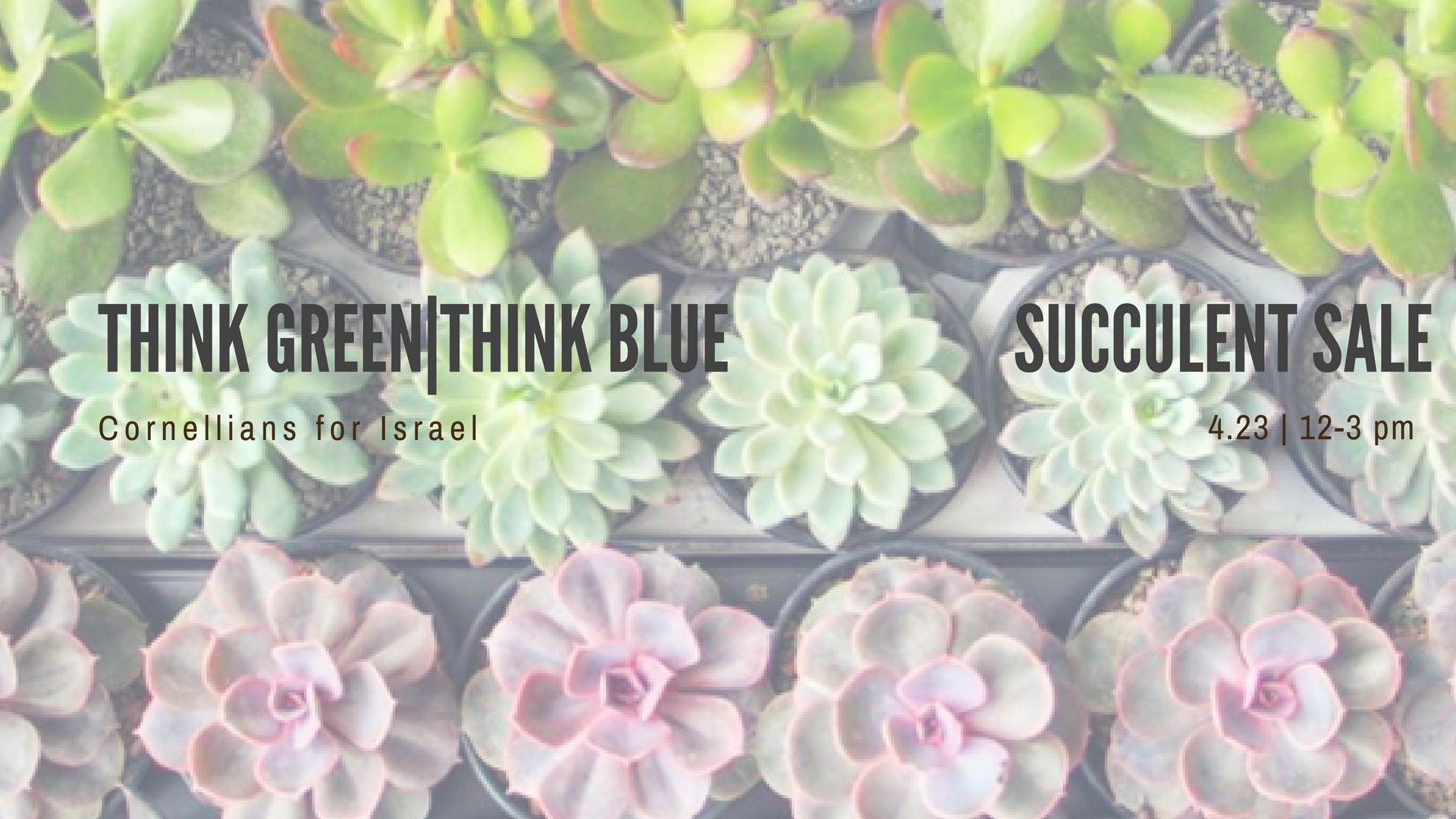 Think Green Think Blue Succulent Sale