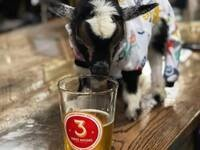 DFW Alumni –Brewery TapRoom Tour