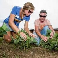Sustainability Roundtable: Community Gardens in Louisville