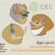 BATX: Acoustic Bat Walk