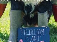 Heirloom Plant Sale @ Frog Hollow Farm