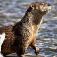 DiscoverE: Otters