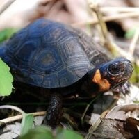 FILM IN THE FOREST: TURTLES