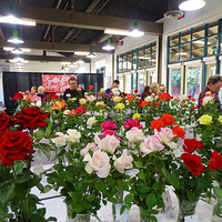 ROSE SHOW Hosted by Santa Clarita Valley Rose Society