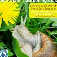 Controlling Weeds, Pests and Diseases