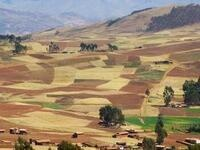 Land Reform and Civil Conflict: Theory and Evidence From Peru by Michael Albertus
