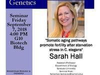 "MBG Friday Seminar with Sarah Hall ""Somatic aging pathways promote fertility after starvation stress in C. elegans"""