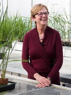 """Pursuing durable, broad-spectrum resistance in rice: Exploiting promoteromes, effectors and MAGIC ""- Jan Leach"