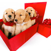 Ruff Relief Therapy Dogs & Gift Wrapping Party
