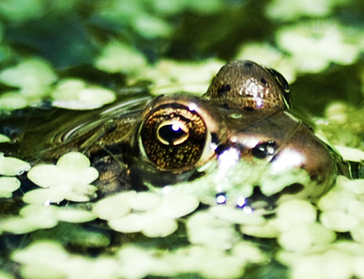 Exhibit opening reception:  Cayuga Basin Bioblitz! A 24 Hour Race to Find What's Living in Our Backyard