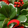 Evergreen Wreath Making