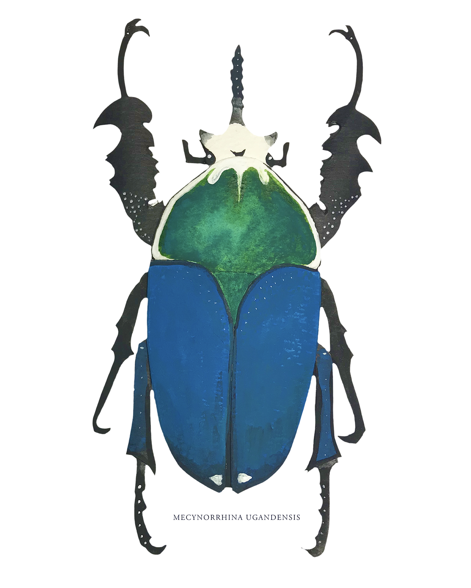 Its Mysterious Life: An Appreciation of Beetles