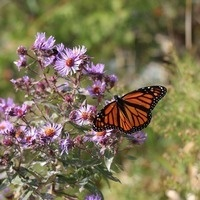 How to Start a Native Plant Garden