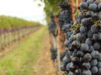What the Wine Industry Means to Walla Walla