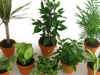 The Selection and Care of Houseplants