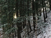 The Finger Lakes Native Plant Society presents the annual Winter Solstice Celebration
