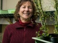 """""""Tale of two ubiquitin E3 ligases in stress responses"""" - Judy Callis"""