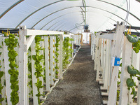 Introduction to Hydroponics Workshop