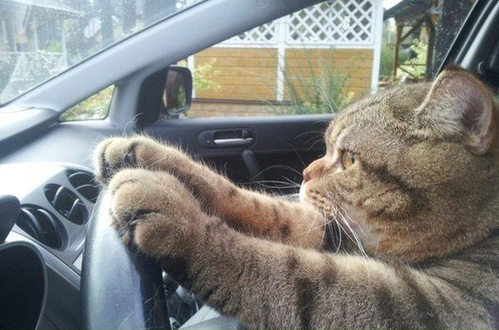 2019 Carpool Challenge Cat-ch a Ride with a Fur-end