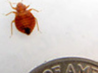 Using Science to Advance Bed Bug Management